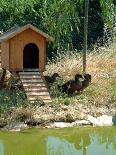 duck house with ramp and ducks lowres_normal