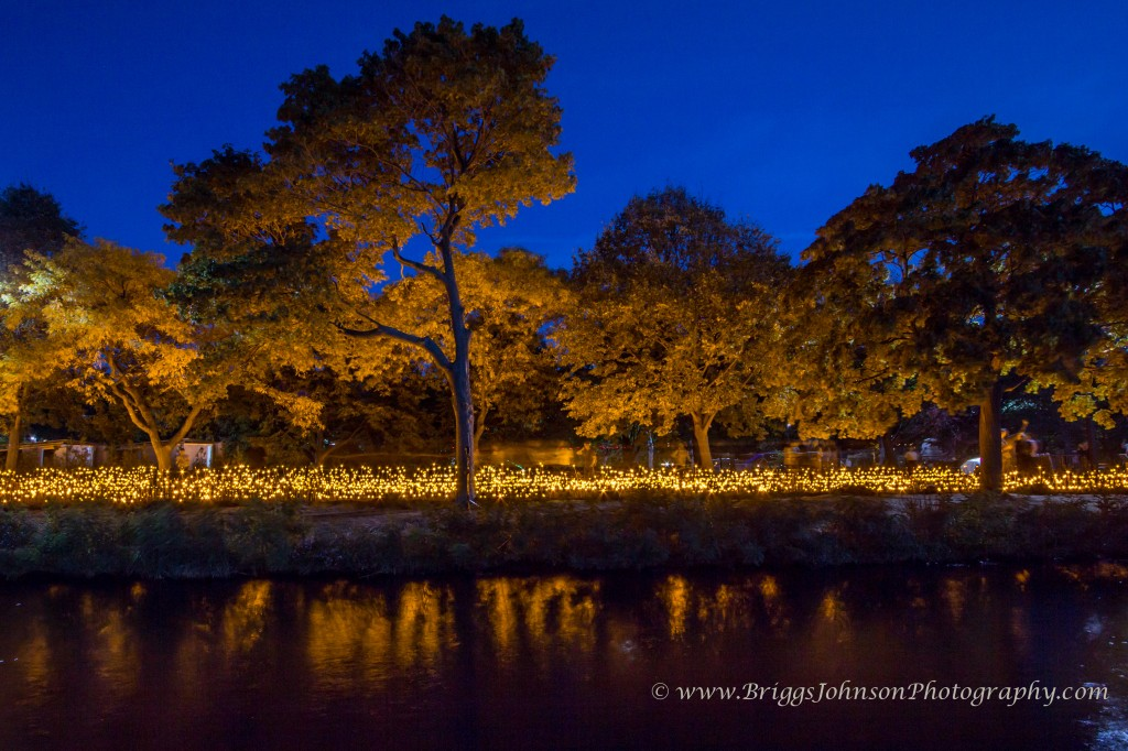 charles river light forest